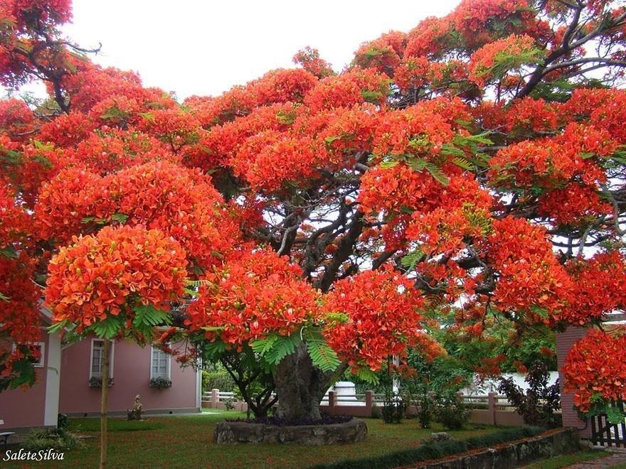 Необычные деревья со всего мира