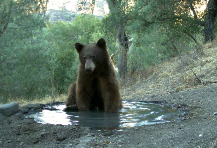 Как медведь использует общий источник