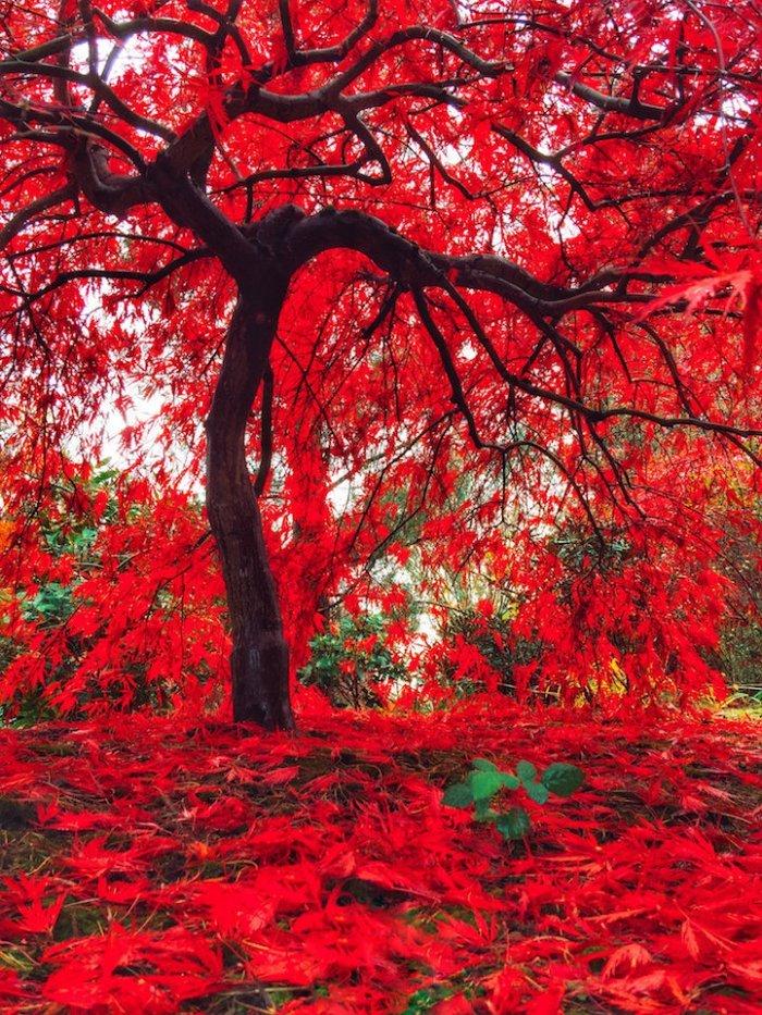 Яркие краски природы в разные времена года