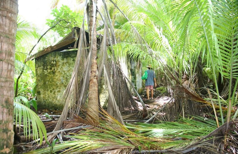 Дикая природа поглощает следы жизни человека на архипелаге Чагос