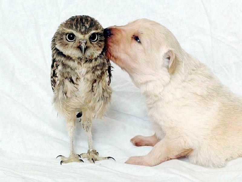 Фото для, картинки с поцелуями смешные