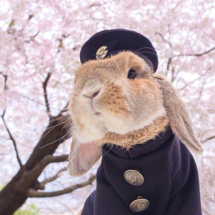Стильный кролик Пэй-Пэй покоряет Instagram