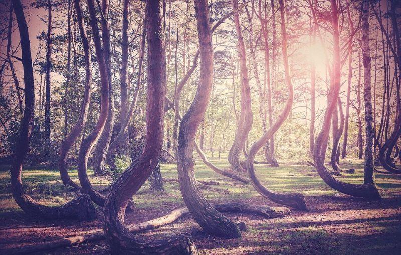 Чудесные явления природы, от которых захватывает дух