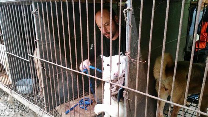 В Южной Корее спасли 200 собак, которых должны были съесть