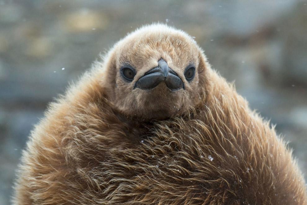 Птичий фотоконкурс Audubon Photography Awards 2016