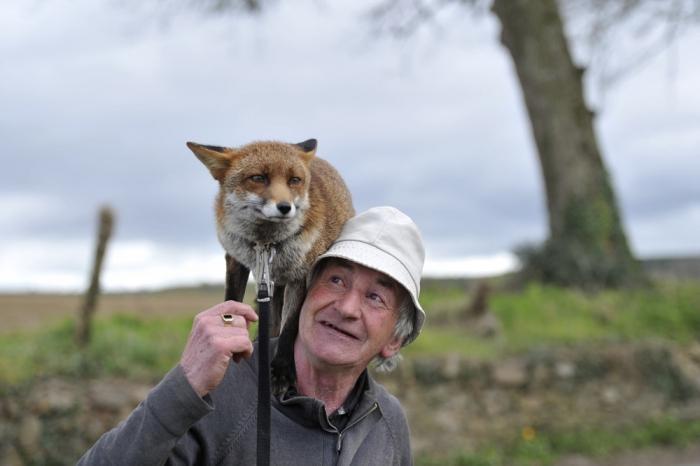 Житель Ирландии спас двух лисят
