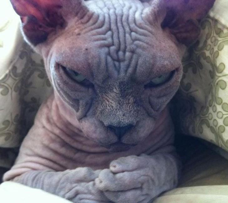25 кошек, которые выглядят угрожающе