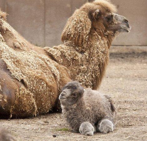Милые детёныши животных, которые заряжают позитивом