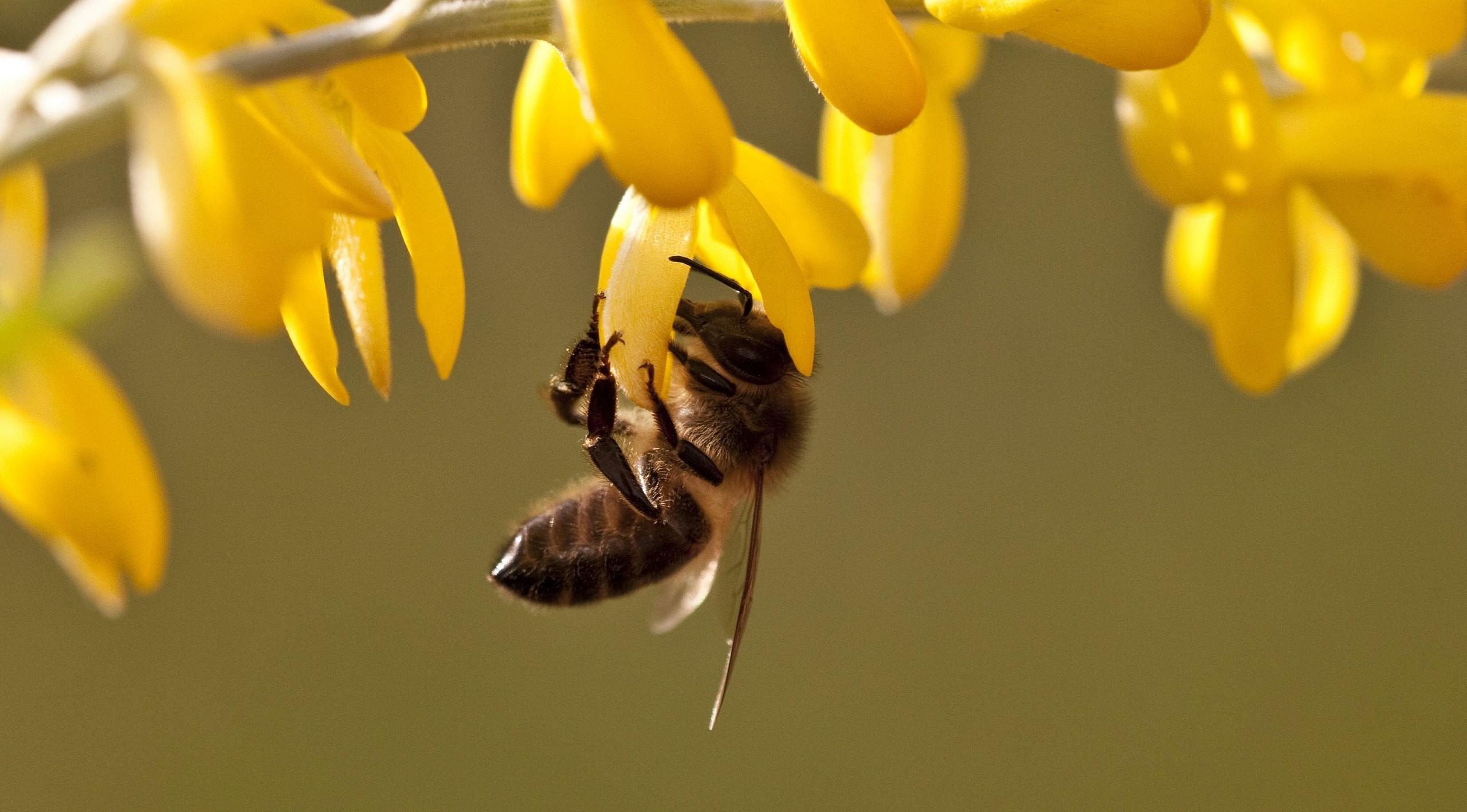 5 фактов о пчелах, которые изменят наше представление о них
