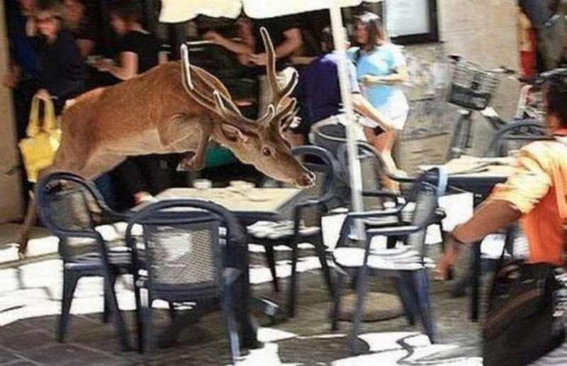 Очень неожиданные встречи с животными