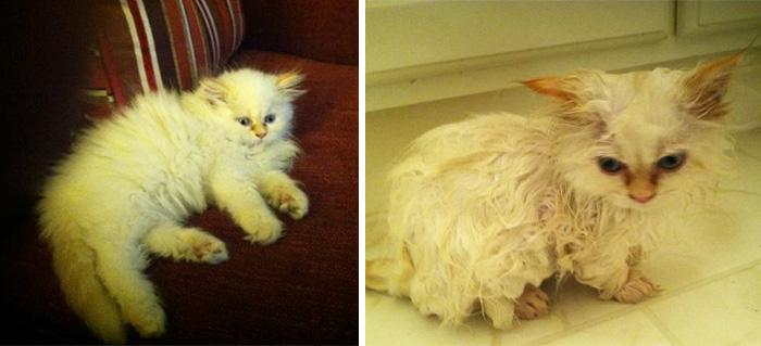 Прикольные фотографии кошек до и после купания