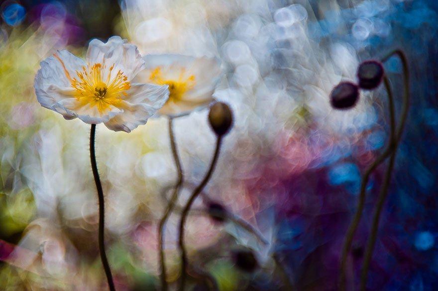 Сказочный мир на макрофотографиях от Магды Васичек
