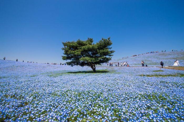 Красоты весенней Японии