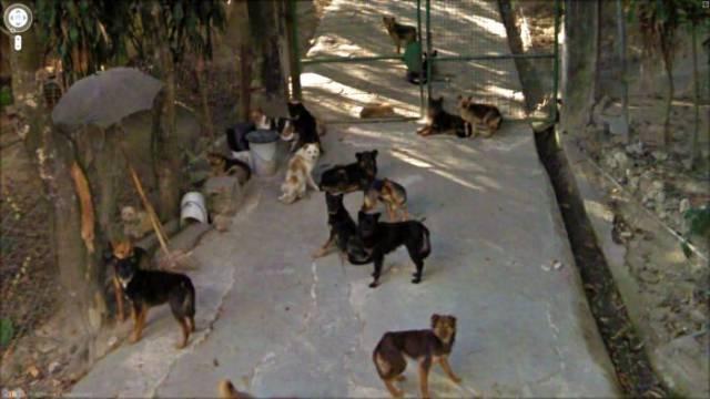 Забавные фотографии от Google Street View