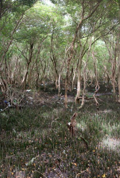 Гибель мангровых лесов на Филиппинах