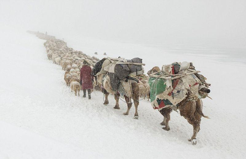 Весеннее переселение казахов в 40-градусный мороз