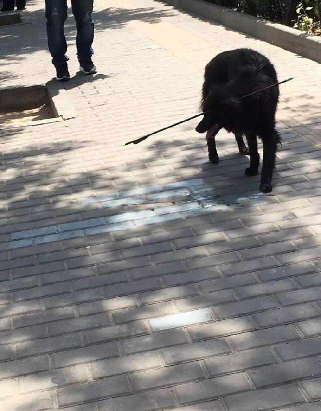Ветеринары спасли жизнь собаке с арбалетной стрелой в голове