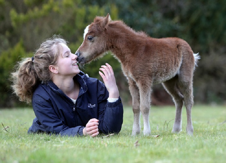 30 максимально милых миниатюрных лошадей