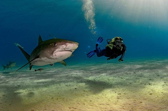 Фотографии от легендарного подводника