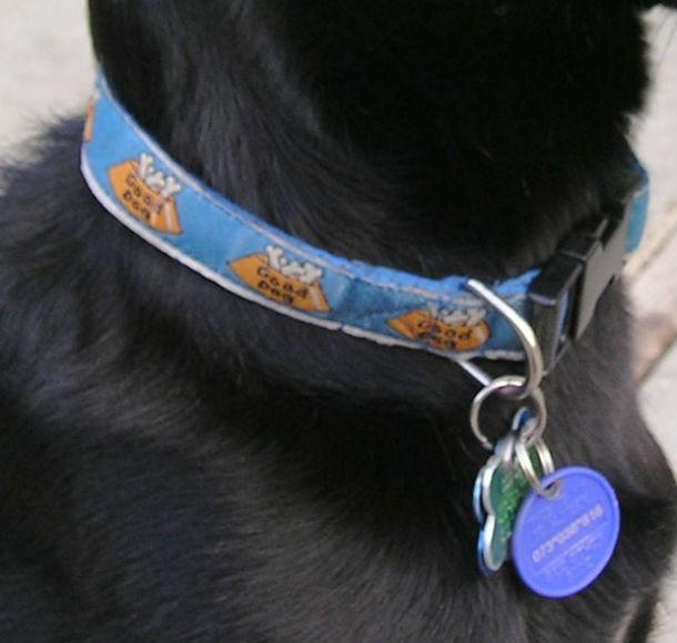 О чём важно знать каждому хозяину собаки