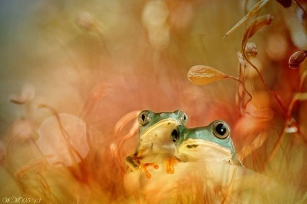 Красота лягушек на ярких фотографиях
