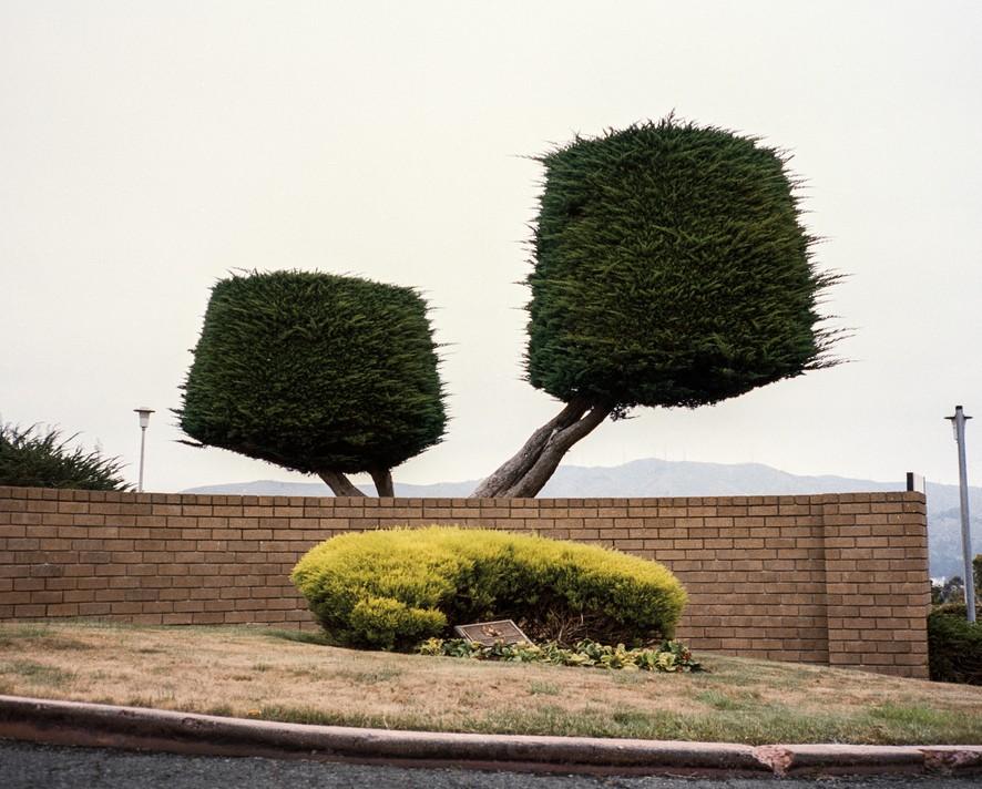 Причудливые растения и дома в Калифорнии