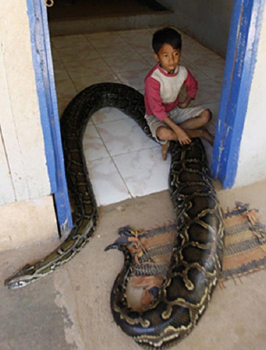 Удивительная дружба мальчика и 5-метрового питона