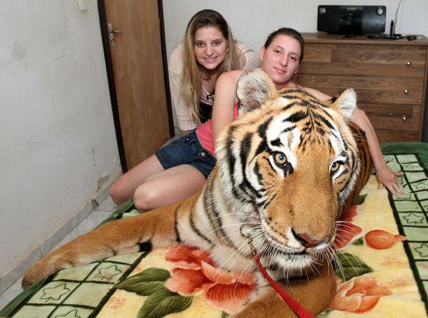 Бразильская семья живет в доме с семью тиграми