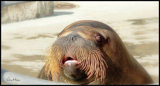 25 крутых бород у животных