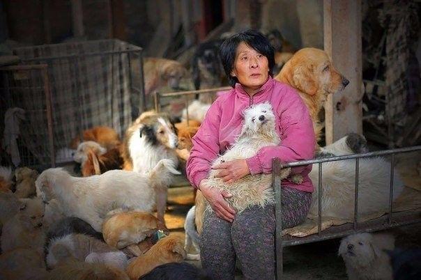 Женщина выкупила сотню собак со скотобойни в Китае
