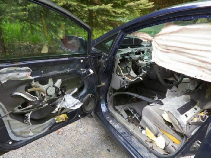 Когда медведь похозяйничал в Honda Civic