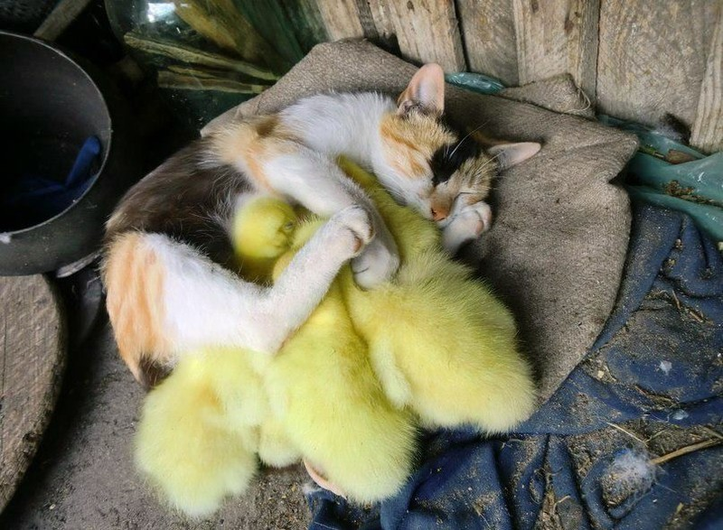 Разные животные так мило спят вместе