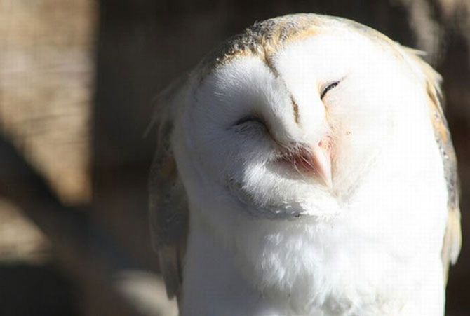 Веселые совы, которые заряжают позитивом