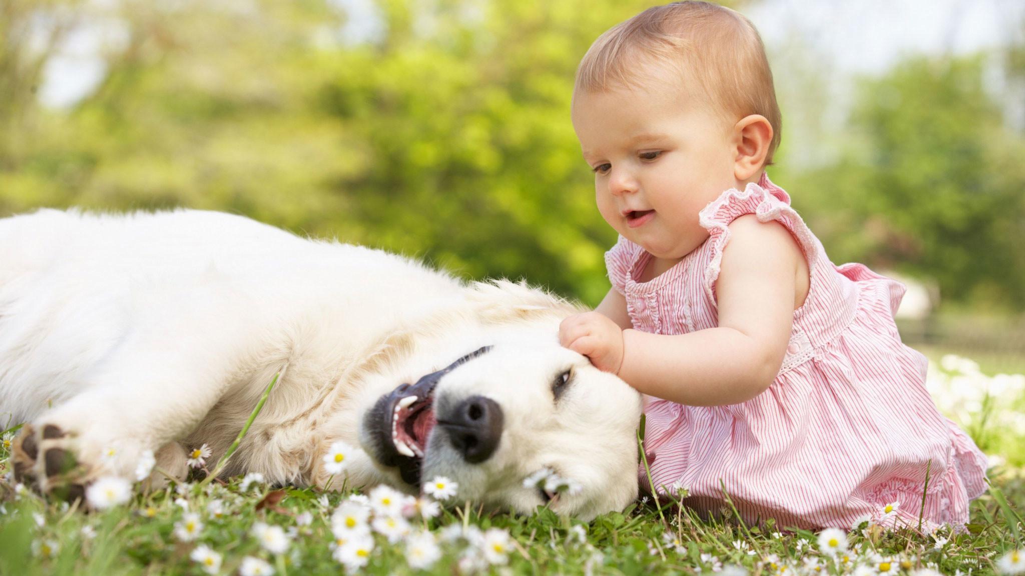 5 фактов о собаках и их отношении к человеку