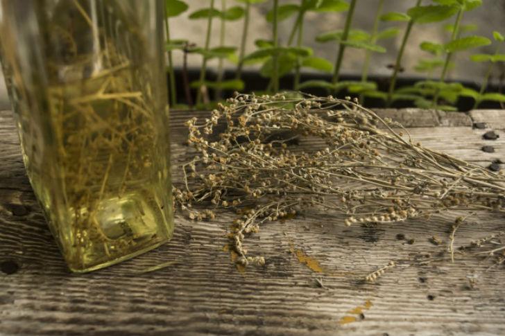 10 натуральных ароматов от комаров