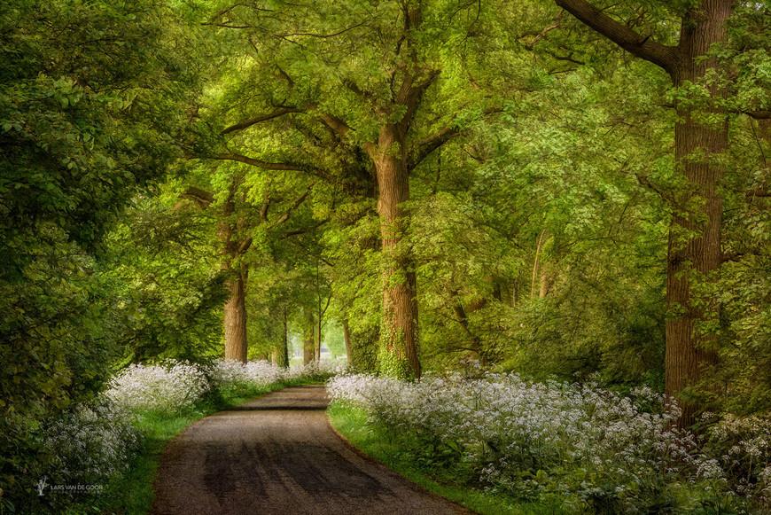 Лесные пейзажи от голландского фотографа Ларса ван де Гура