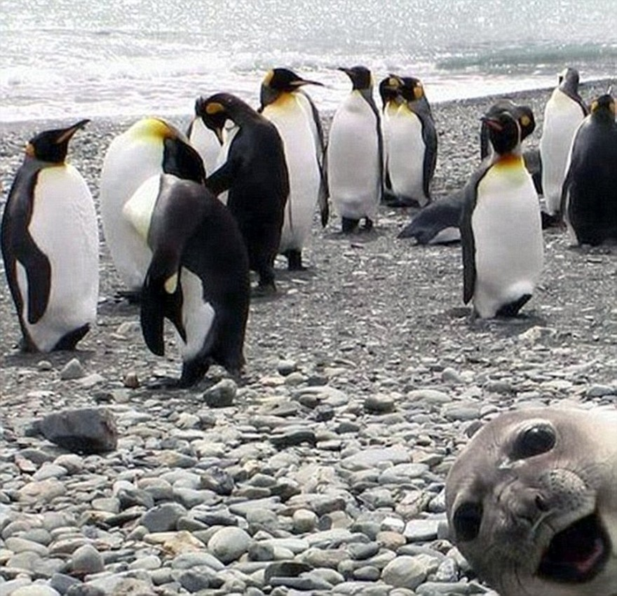 Забавные животные, которые неожиданно вклинились в селфи