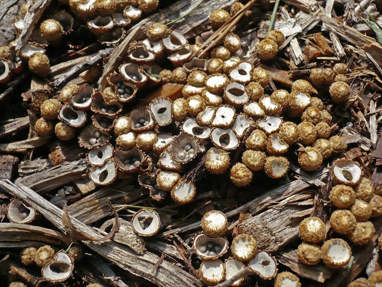 Самые необычные грибы мира