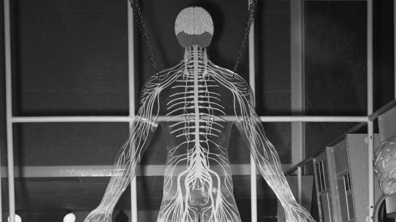 Странные вещи, которые умеет делать наше тело