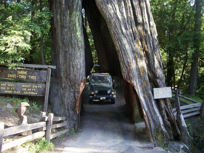 Тоннели в секвойядендронах в Национальных парках Калифорнии