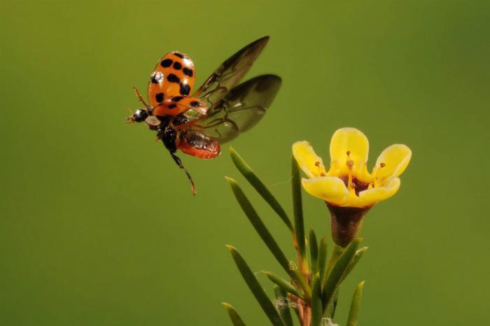 Застывшие во времени животные и насекомые
