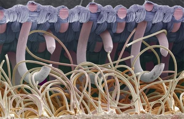 Удивительные фотографии предметов и существ под микроскопом