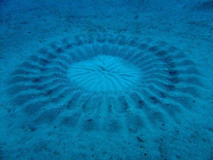 10 загадок на дне мирового океана