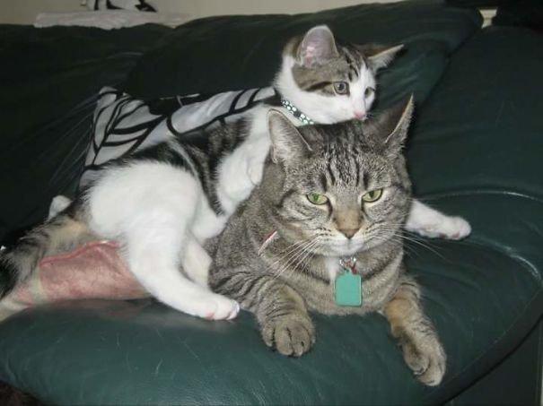 Многодетные мамочки из мира животных