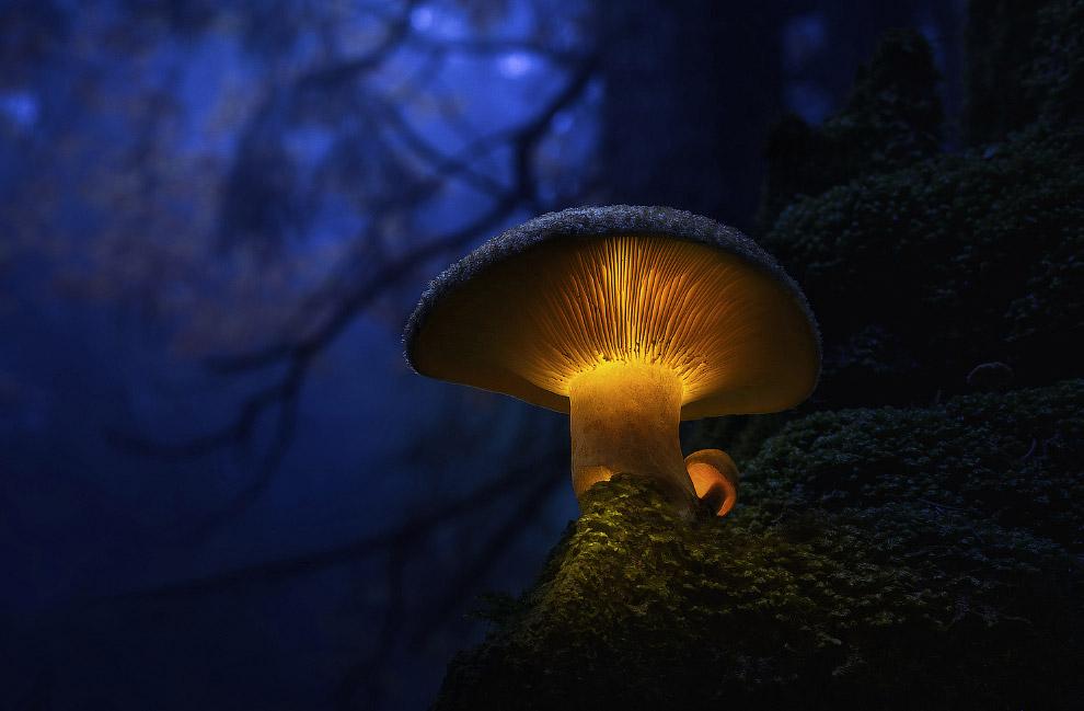 Светящиеся грибы от Мартина Пфистера