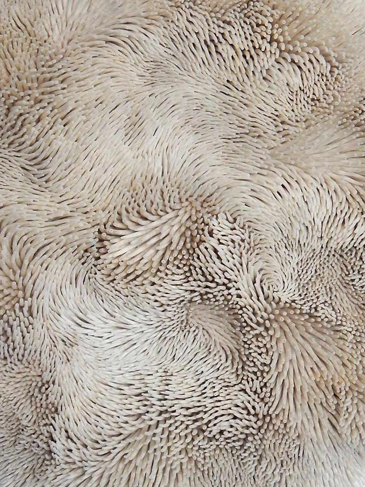 Картины из морских ракушек от Роуэна Мерша