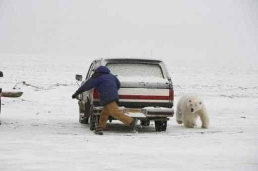 Когда животные атакуют