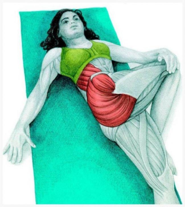 Изображения мышц, которые задействованы в упражнениях