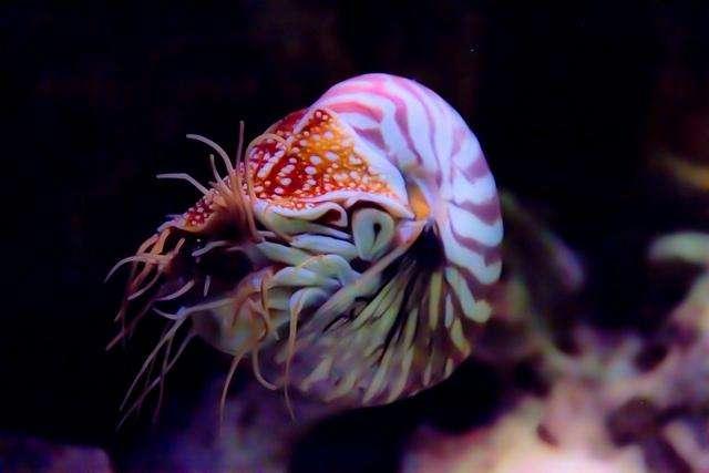 Самые древние живые существа на планете