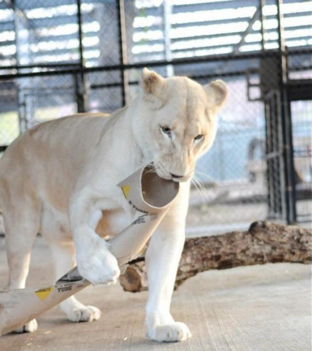 Как любовь льва спасла